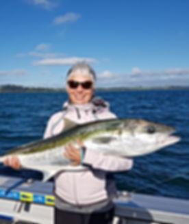 Bay of Islands Kingfish