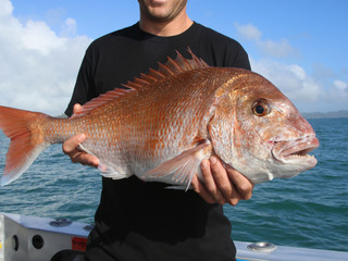 Days Out Fishing Charters Bay of Islands & NZ Fishing News NZ Hutchwilco Boat Show 2018 Competit