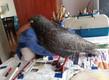 Espanta palomas