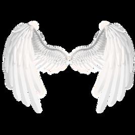 Wings_edited.png