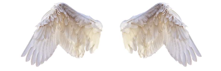 white-wings-2473023_1280_edited.png