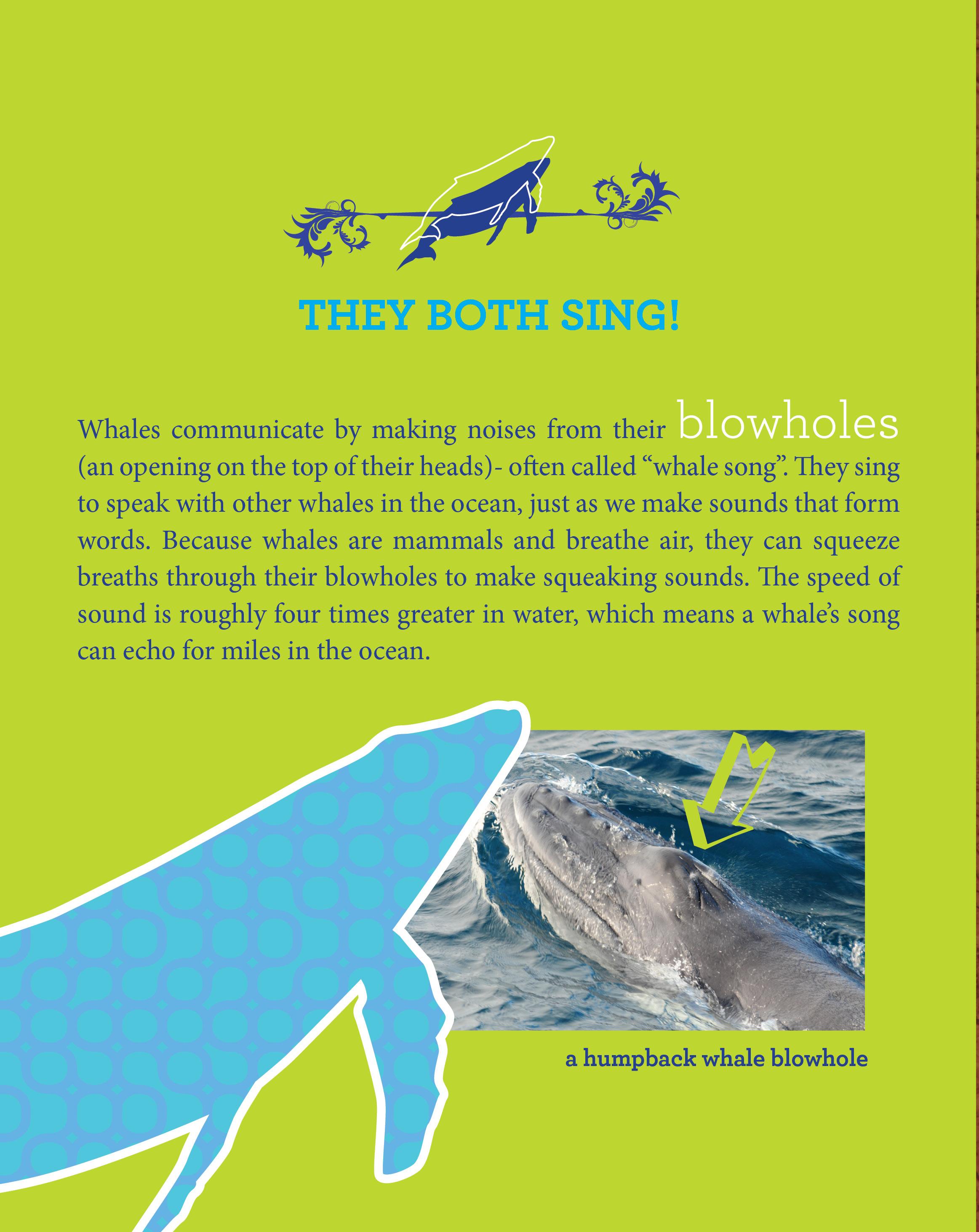 Animals Like Us-whales2.jpg
