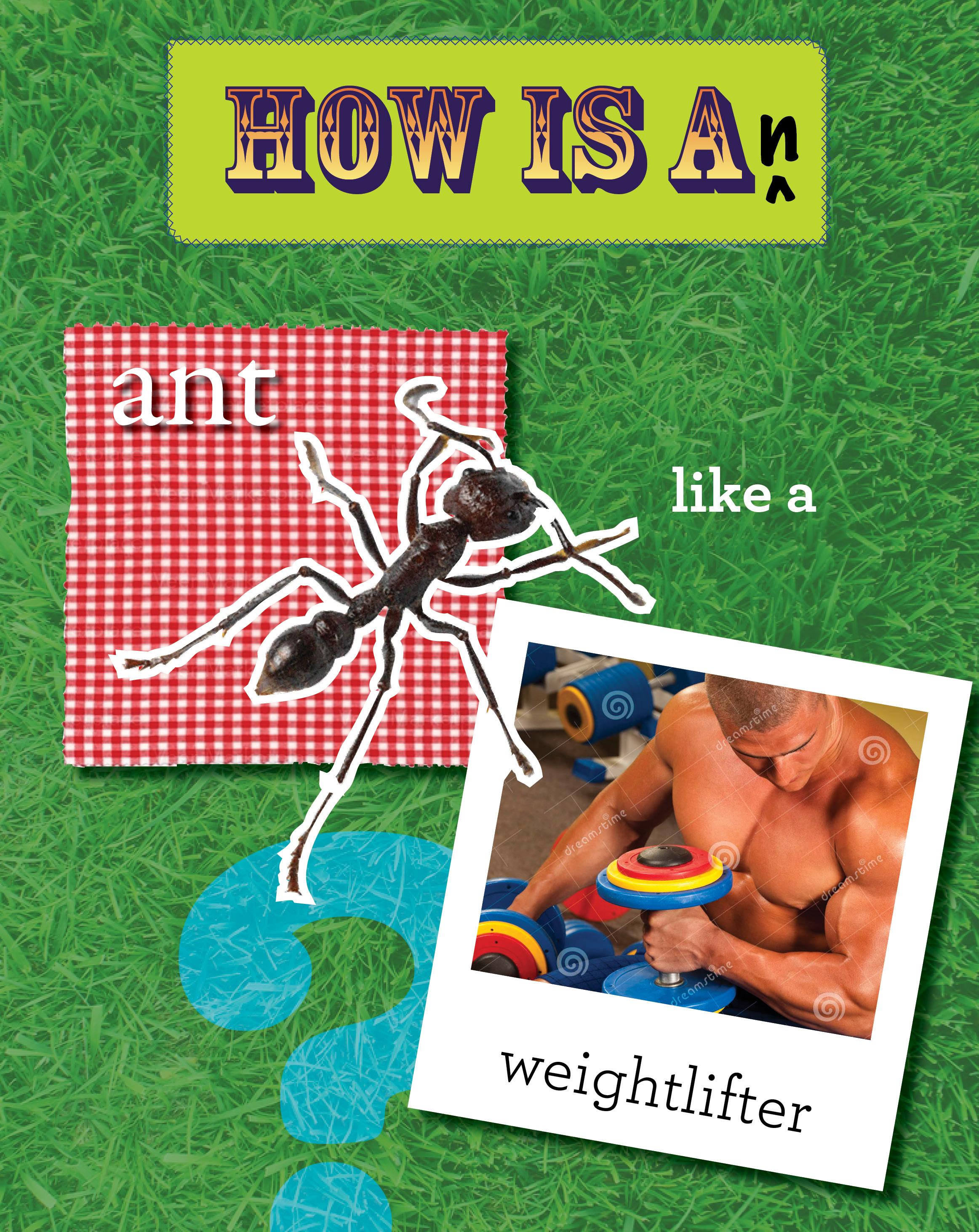 Animals Like Us-ant.jpg