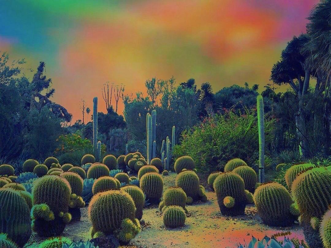 Cactus Wonderland Olivia D'Orazi