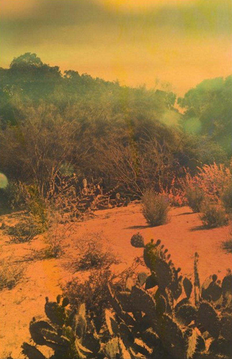 Cactus, Olivia D'Orazi