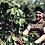 Thumbnail: FORTALEZA - BLEND ESPECIAL ESPRESSO