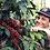 Thumbnail: LAS MUJERES - COSTA RICA TARRAZÚ