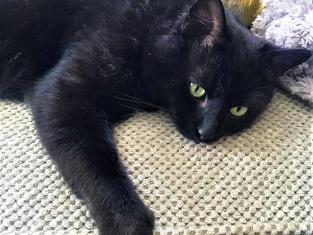 Name This Cat.