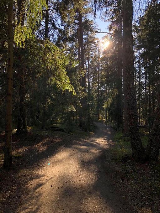 skog och stig sommar.jpg
