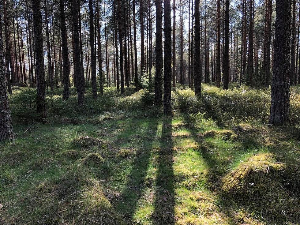 skog 5.jpg