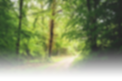 Tree-Path-July-2015-1024x683.png