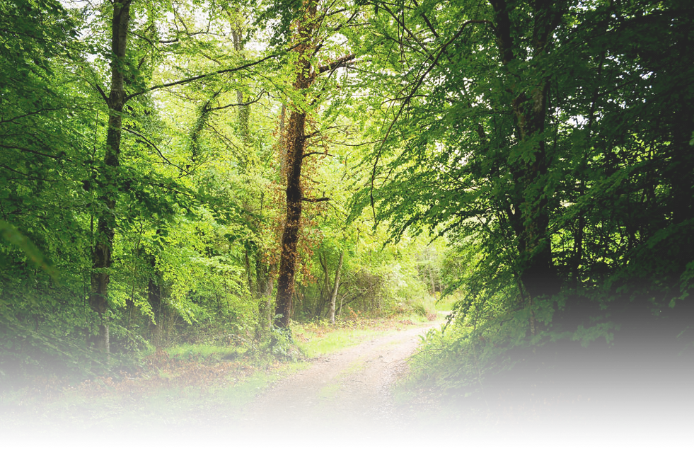 Tree-Path-July-2015-1024x683.png