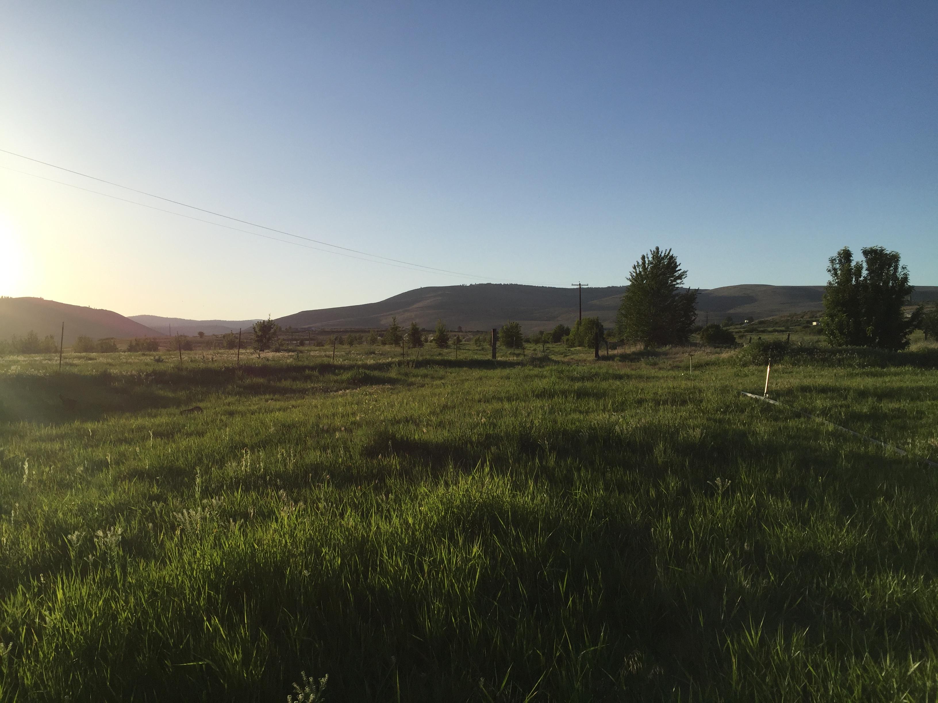 pasture pic