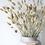Thumbnail: Dried Phalaris Grass - Natural
