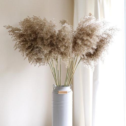 Medium Dried Pampas Grass - Natural