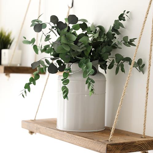 Preserved Eucalyptus Stuartiana - Green