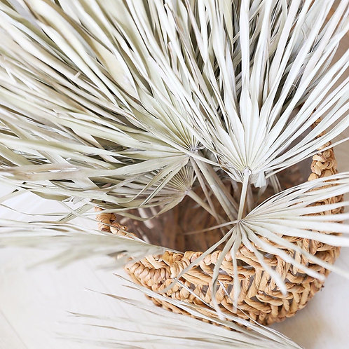 Large Dried Palm Leaves