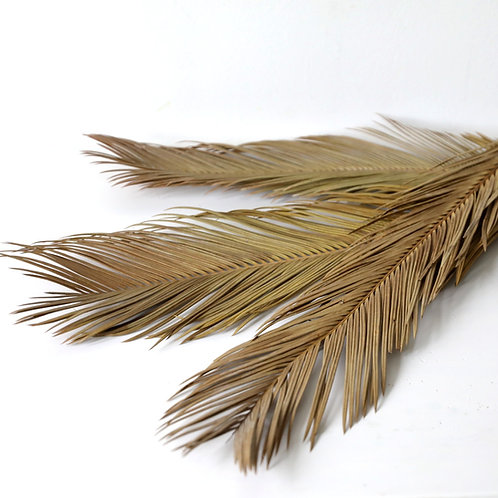 Dried Sago Palm Leaves - Natural