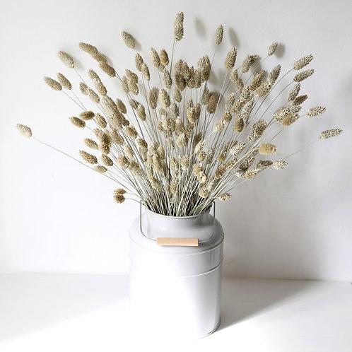 Dried Phalaris Grass - Natural
