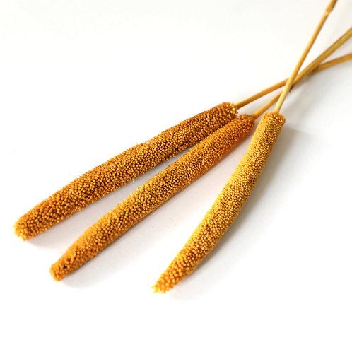 Dried Babala - Yellow