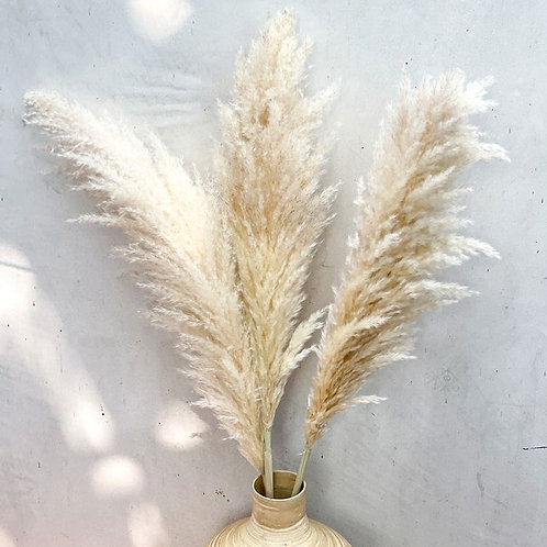 Large Dried Fluffy Pampas Grass - Natural Cream