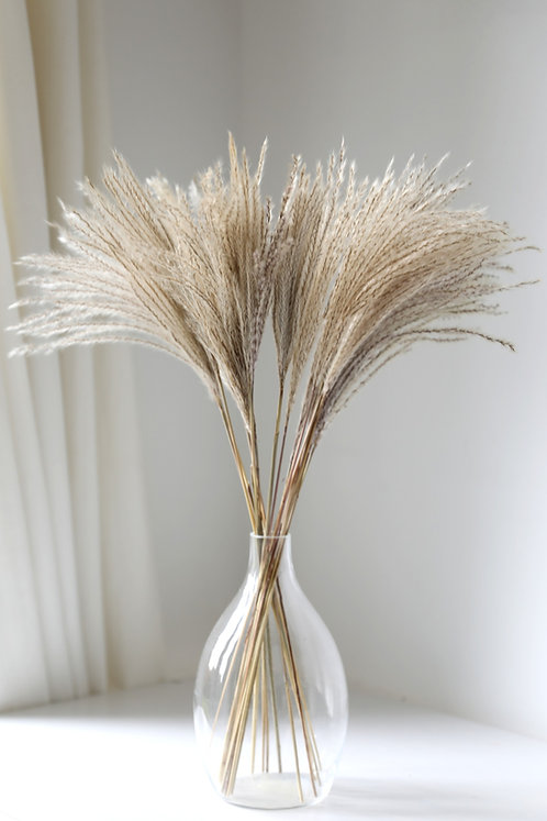 Dried Miscanthus - Natural