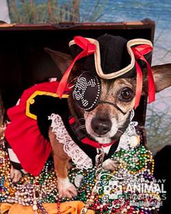 Barkarilla - The Pirate Pooch Parade