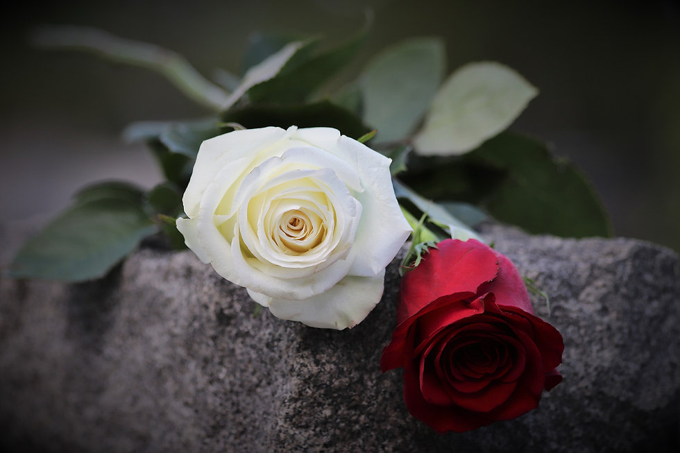 red-and-white-rose-4205748_1920.jpg