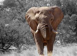 Estatais: Elefantes Sedentários?