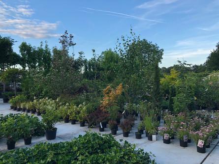 Conny Schmitz Plantenhandel