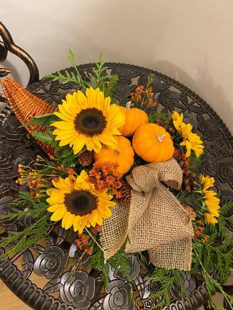 Pumpkins%20%26%20Pinecones_edited.jpg