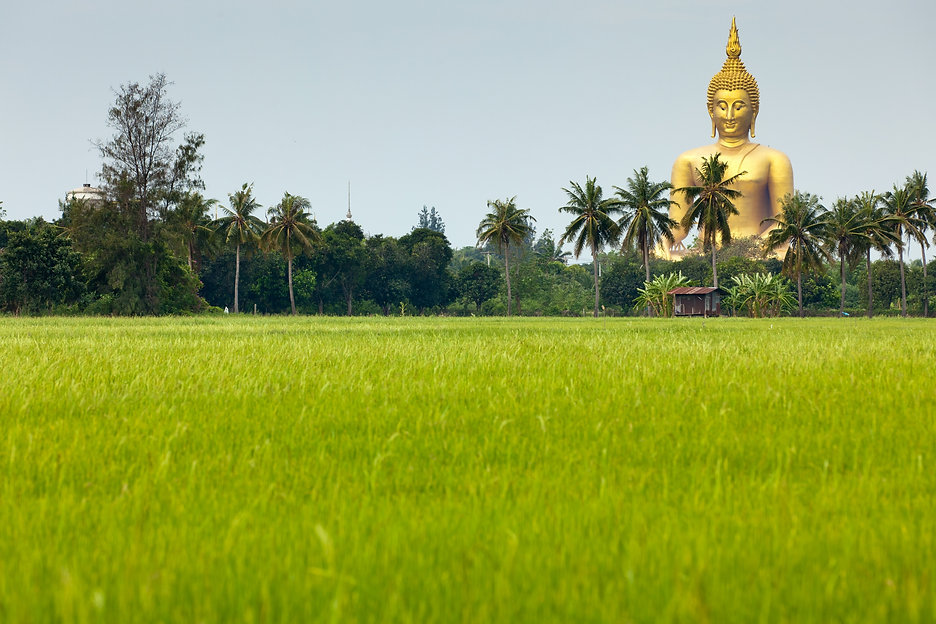 rice field  and wat muang giant buddha i