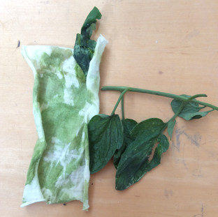 Dyeing with Tomato Leaves