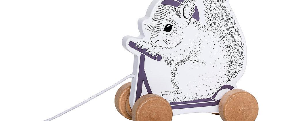 Écureuil sur trottinette