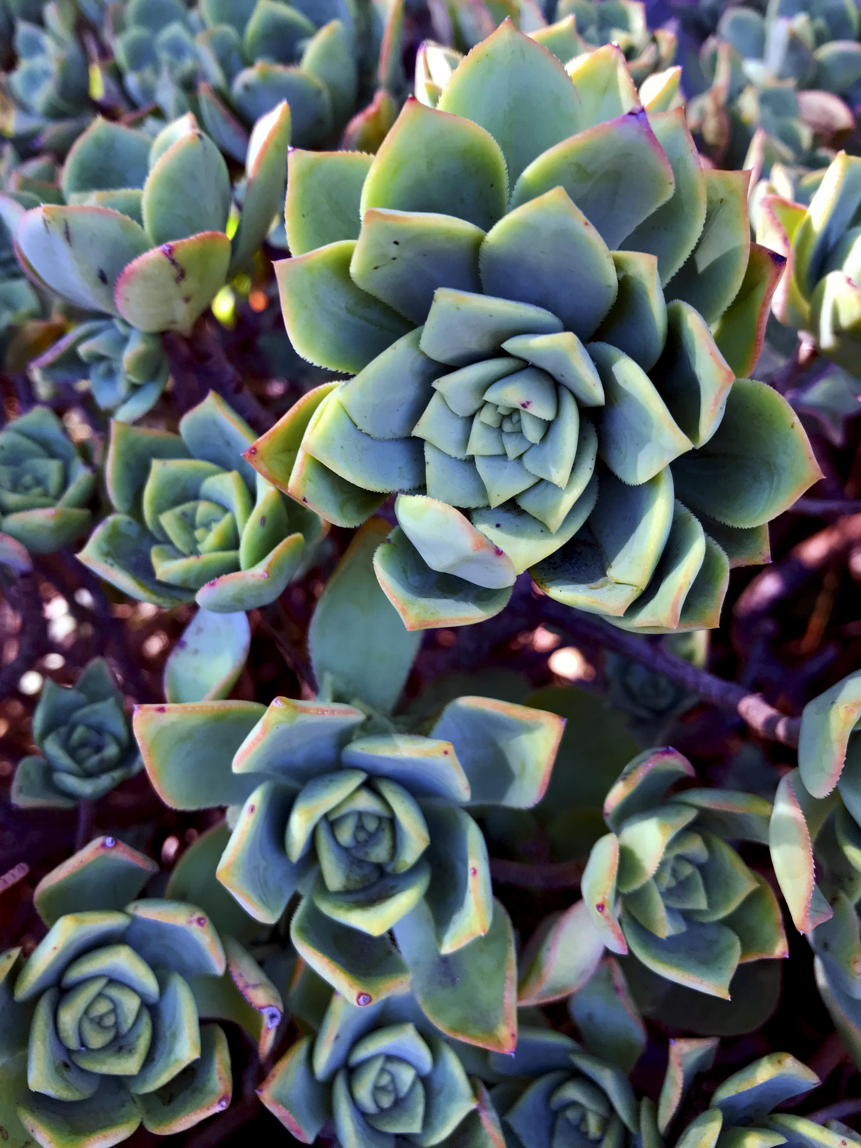Verde Lush