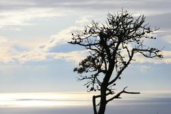 Treemette