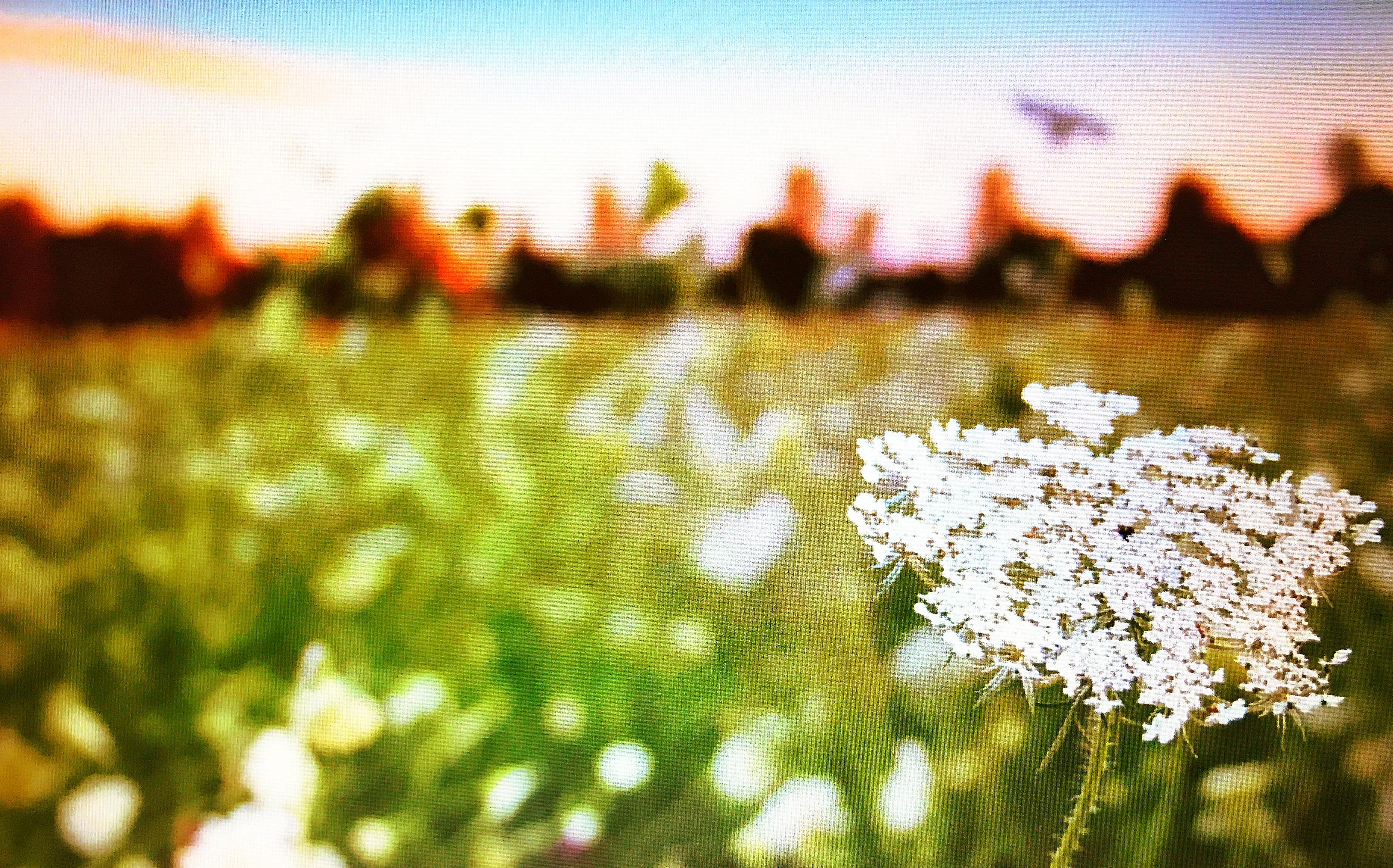 Chantilly Field
