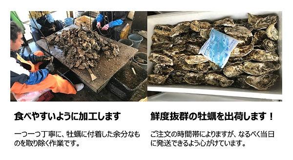 唐津産牡蠣.jpg