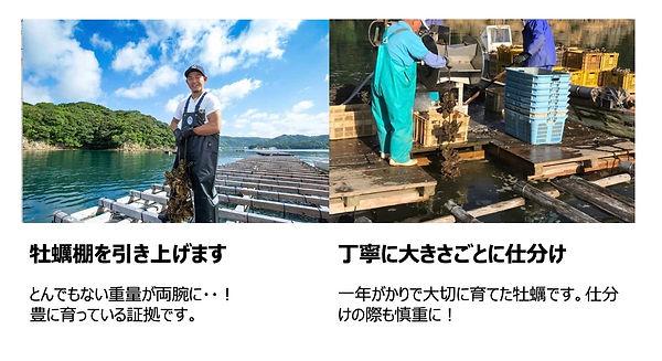 仮屋湾の牡蠣養殖.jpg