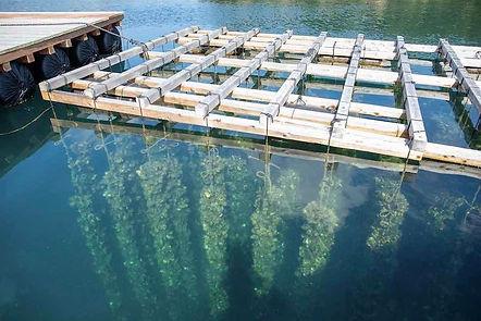 仮屋湾牡蠣小屋