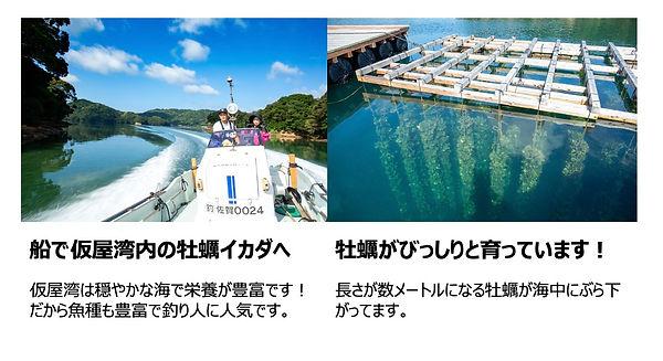 仮屋湾の牡蠣ネット販売.jpg