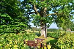 Theißbaum