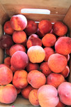 The Peaches Are In!