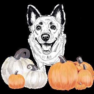 ADD ON: Hello Pumpkin - No Background