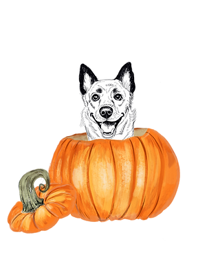 ADD ON: Cutest Pumpkin in the Patch - No Background