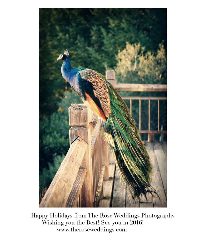 Happy Holidays from The Rose Weddings Photography