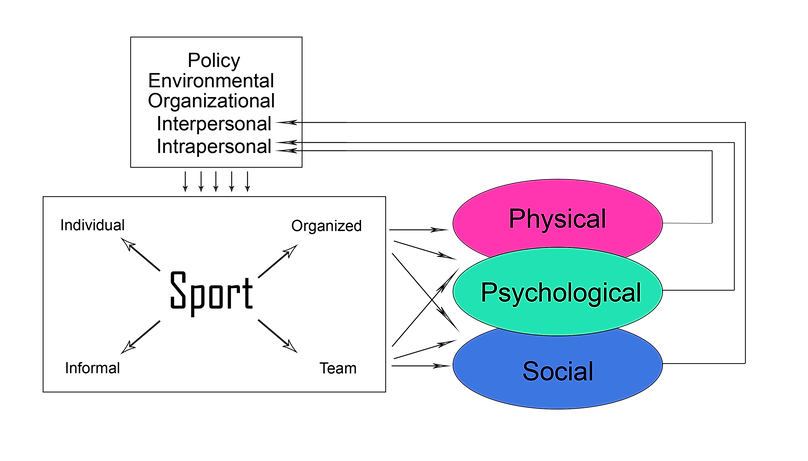Ecological Model Sports.png