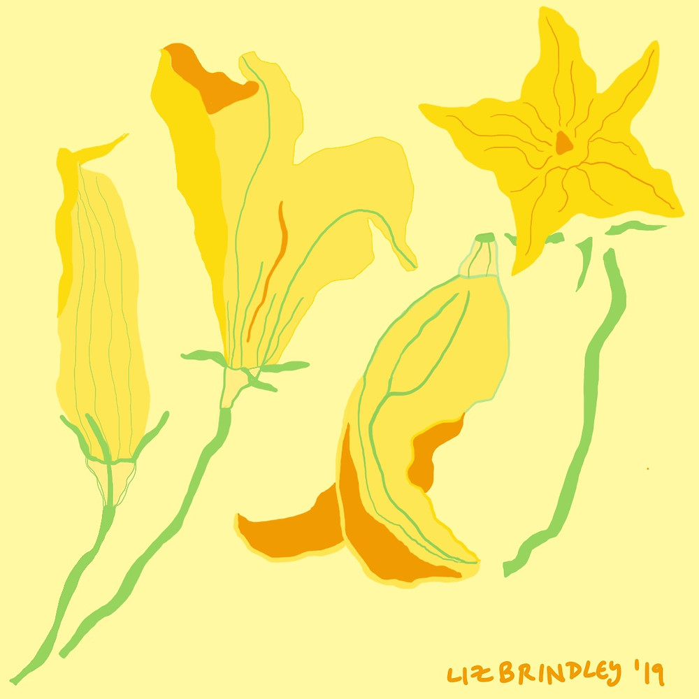Illustration of Squash Blossoms on Yellow Background