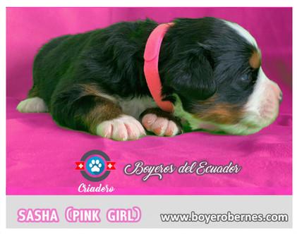 pink5_optimized.jpg