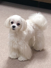 犬2.png